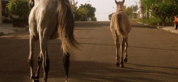 caballos-sueltos