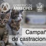 Castraciones 2015