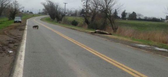 Caballos muertos ruta 8